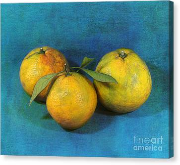 Satsumas Canvas Print by Judi Bagwell