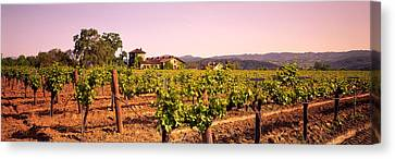 Sattui Winery, Napa Valley, California Canvas Print by Panoramic Images