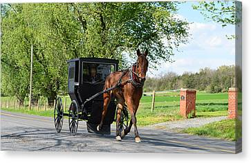 Saturday Buggy Ride Canvas Print by Cathy Shiflett