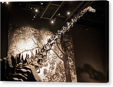 North American Wildlife Canvas Print - Sauropod Dinosaur Fossil Display by Jim West