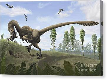 Saurornitholestes Seeks Prey In Burrows Canvas Print by Emily Willoughby