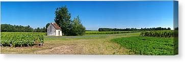 Winemaking Canvas Print - Sauvignon Blanc Vineyard, Pouille by Panoramic Images