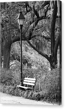 Savannah Afternoon - Black And White 2x3 Canvas Print by Carol Groenen