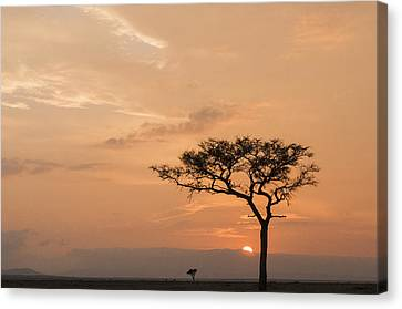 Savannah Dawn Canvas Print