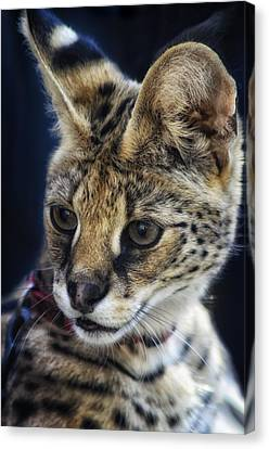Savannah Jungle Cat Canvas Print
