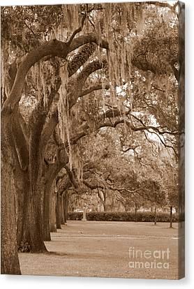 Savannah Sepia - Emmet Park Canvas Print by Carol Groenen