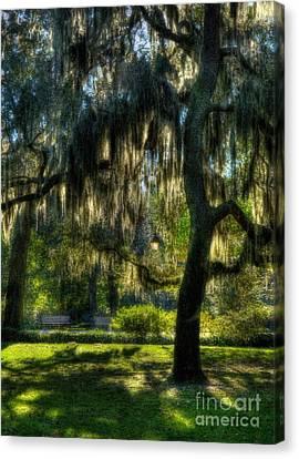 Savannah Sunshine Canvas Print by Mel Steinhauer
