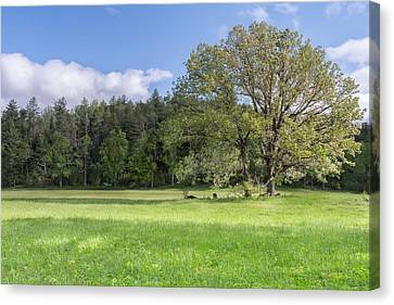 Save My Tree Canvas Print by Jon Glaser