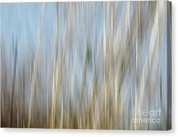 Sawgrass In Motion Canvas Print by Benanne Stiens