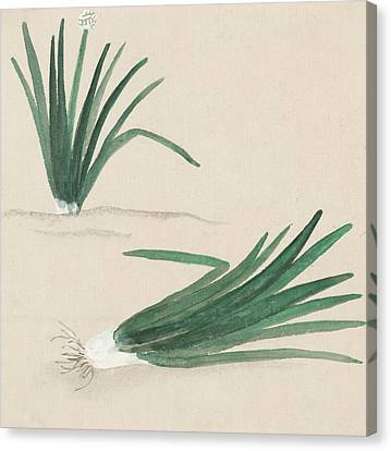 Scallions Canvas Print by Aged Pixel