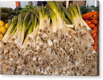 Scallions Canvas Print by Art Ferrier