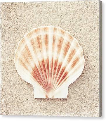 Scallop Shell Canvas Print by Carolyn Cochrane