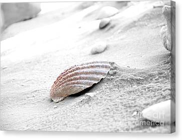 Canvas Print featuring the photograph Scallop Shell by Robert Meanor