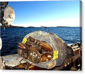 Scallops Bounty Of The Sea Canvas Print