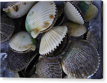 Scallops Canvas Print