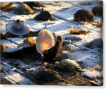 Half Shell On Ice Canvas Print by Karen Wiles
