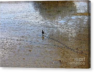 Scamper Canvas Print by Wingsdomain Art and Photography