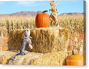 Canvas Print featuring the photograph Scarecrow Breaktime by Vinnie Oakes