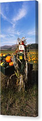 Scarecrow In Pumpkin Patch, Half Moon Canvas Print by Panoramic Images