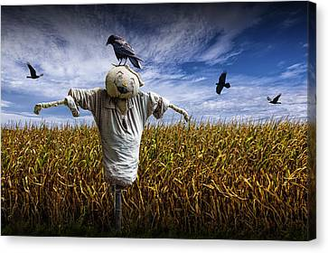 Scarecrow With Black Crows Over A Cornfield Canvas Print by Randall Nyhof