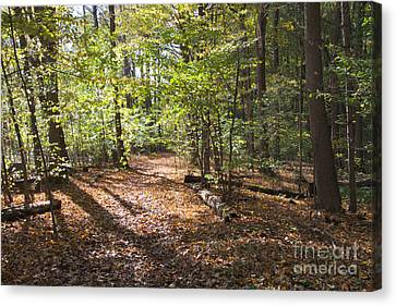 Scared Grove 2 Canvas Print