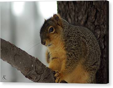 Scared Squirrel Canvas Print