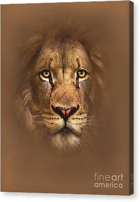 Scarface Lion Canvas Print by Robert Foster
