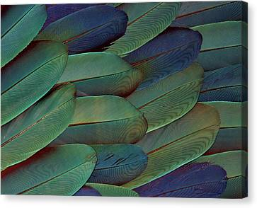 Blue And Gold Macaw Canvas Print - Scarlet And Blue Gold Macaw Wing by Darrell Gulin