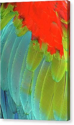 Scarlet Macaw (ara Macao Canvas Print