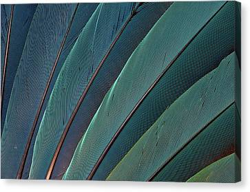 Scarlet Macaw Wing Feathers Canvas Print