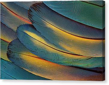 Scarlet Macaw Wing Feathers Fan Design Canvas Print