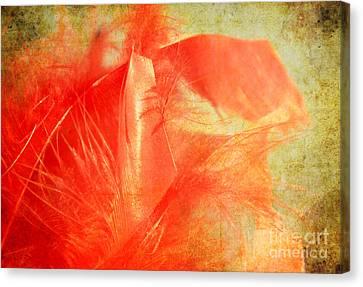 Scarlet On Vintage Canvas Print