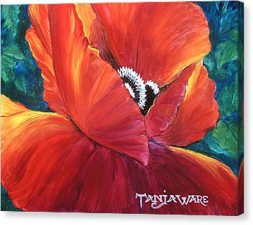 Scarlet Poppy Canvas Print by Tanja Ware
