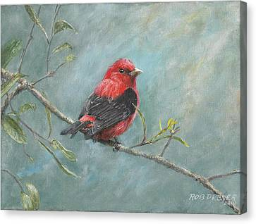 Audubon Canvas Print - Scarlet Tanager by Dreyer Wildlife Print Collections