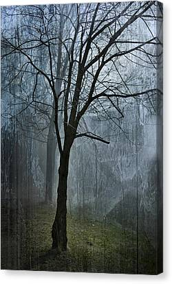 Scars Of Fog Canvas Print by Melissa Smith