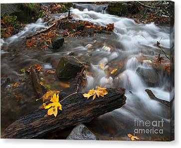 Scattered Gold Canvas Print by Mike Dawson