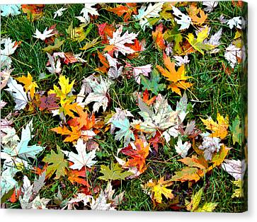 Scattered Leaves Canvas Print by Mariola Szeliga