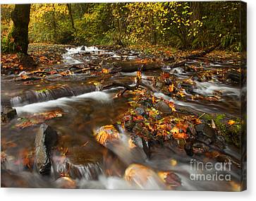 Scattered Leaves Canvas Print by Mike  Dawson