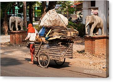Cardboard Canvas Print - Scavenger by Rick Piper Photography