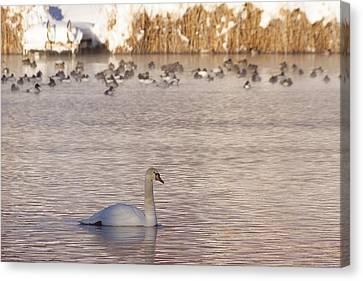 Nevada Canvas Print - Scene At The Lake by Gloria Pasko