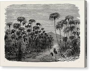 Scene On A Tributary Of The Nile Bulrushes Canvas Print