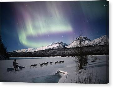 Matanuska Canvas Print - Scenic View Of Dog Team Mushing On The by Composite Image