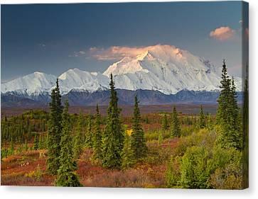 Scenic View Of Mt. Mckinley At Sunrise Canvas Print by Lynn Wegener