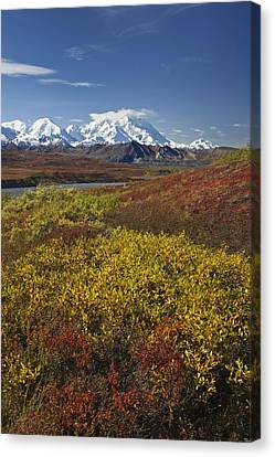 Scenic View Of Mt.mckinley From Canvas Print by John Delapp