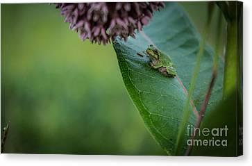 Schlitz Audubon Tree Frog Canvas Print
