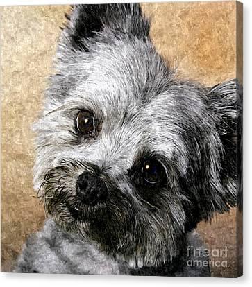 Schnauzer Puppy Painting Canvas Print by Bob and Nadine Johnston