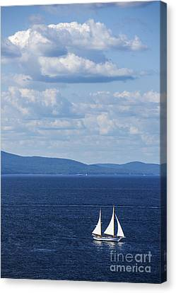 Schooner On The Bay Canvas Print by Diane Diederich