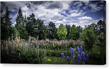 Schreiners Iris Gardens Canvas Print