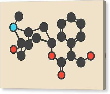 Scopolamine Drug Molecule Canvas Print