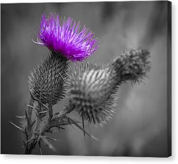 Scotland Calls 1 Canvas Print by Scott Campbell